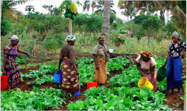 Women farming in Tanzania