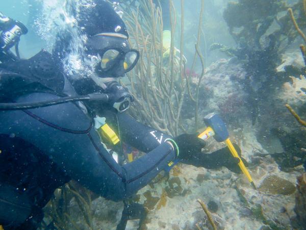 FWC scientist Stephanie Schopmeyer carefully chisels an elliptical star coral off a reef in the Lower Keys.