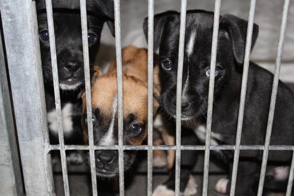 Puppies taken in by the Finney County Humane Society this week.