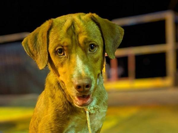 The rescued dog appeared to be growing stronger on the oil rig before he made his journey back to shore.