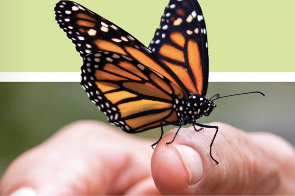 A group of 16 Illinois organizations and agencies have teamed up to help the monarch butterfly survive.