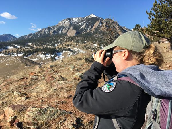Heather Swanson, wildlife ecologist with the City of Boulder, looks for infected mule deer in March.
