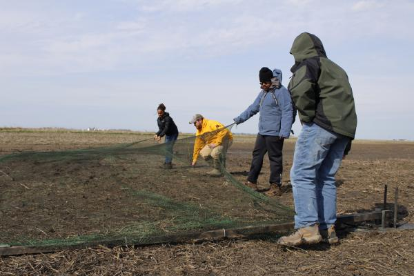 Researchers set a net to catch American golden plovers in eastern Illinois. Ben Williams (in yellow) is leading the effort to catch, tag and track the bird before it migrates north to breed.