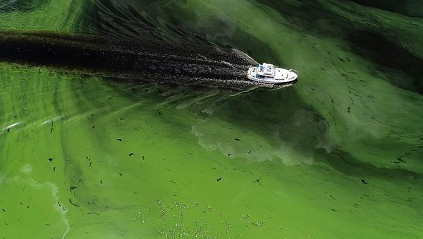 A boat motors through thick algae blooms in the Caloosahatchee River near LaBelle last summer.