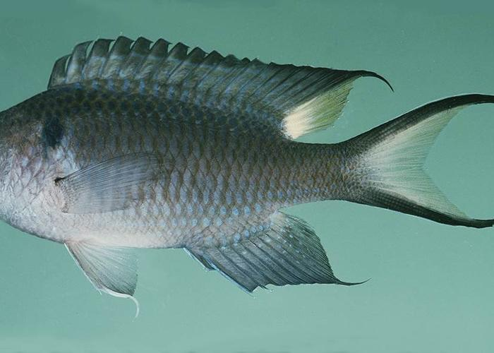 This cute critter could be florida 39 s next invasive species for Invasive fish in florida