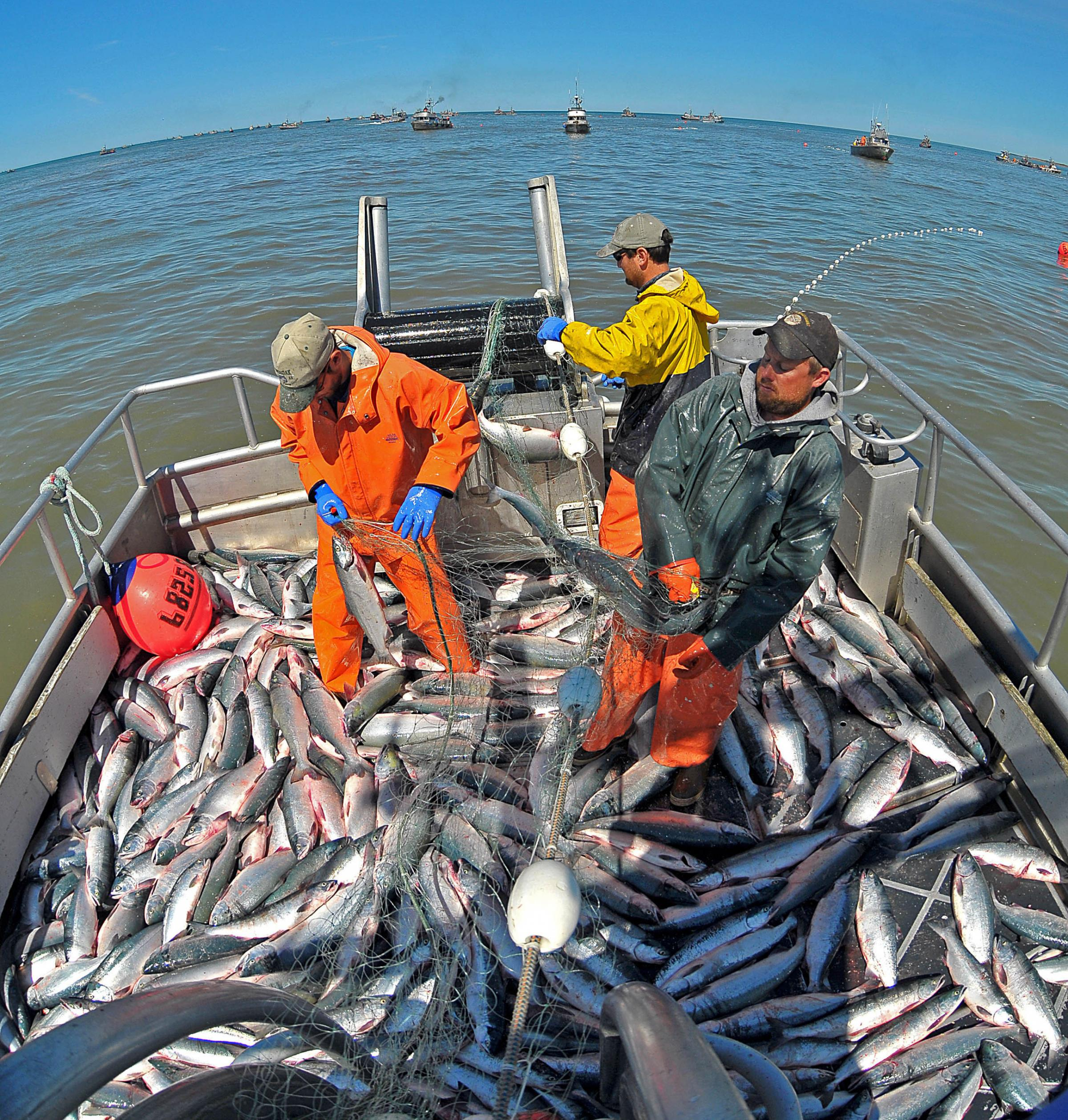 Deadliest job in america fishing wusf news Fish for jobs