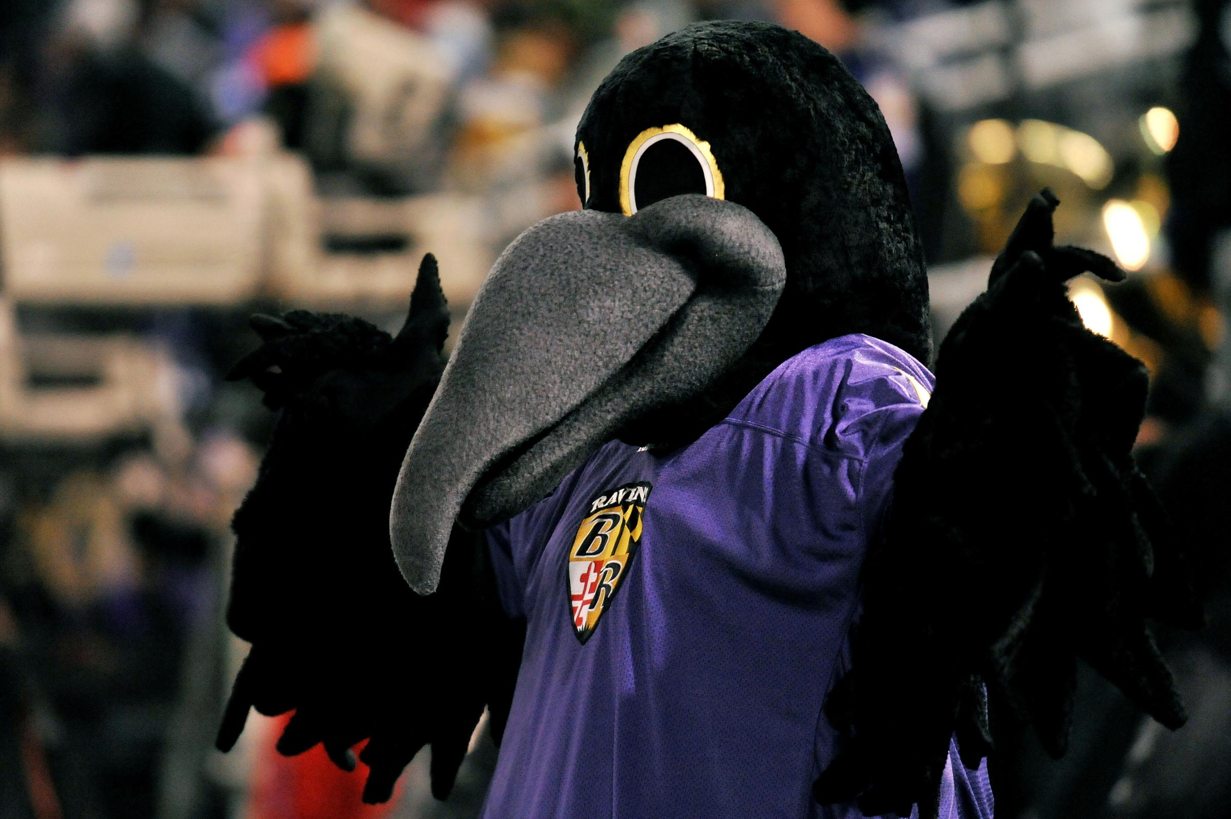 What is the baltimore ravens mascot name - Poe The Mascot Of The Baltimore Ravens Cheers On The Team During The Game Against The Pittsburgh Steelers In December 2010