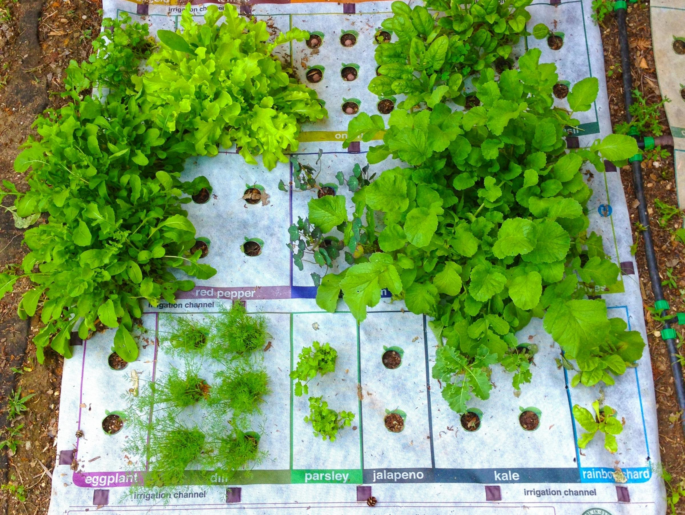 Why micro gardening could go big kuow news and information for Planting a garden