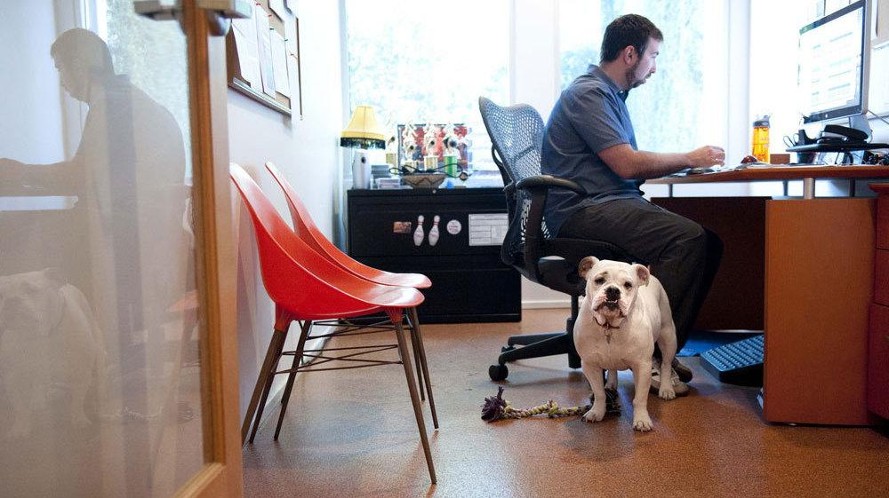 Ginger An English Bulldog Comes To Work Each Day With Will Pisnieski Shes One Of Several Dogs Who Are Regular Fixtures At Dog Friendly Authentic