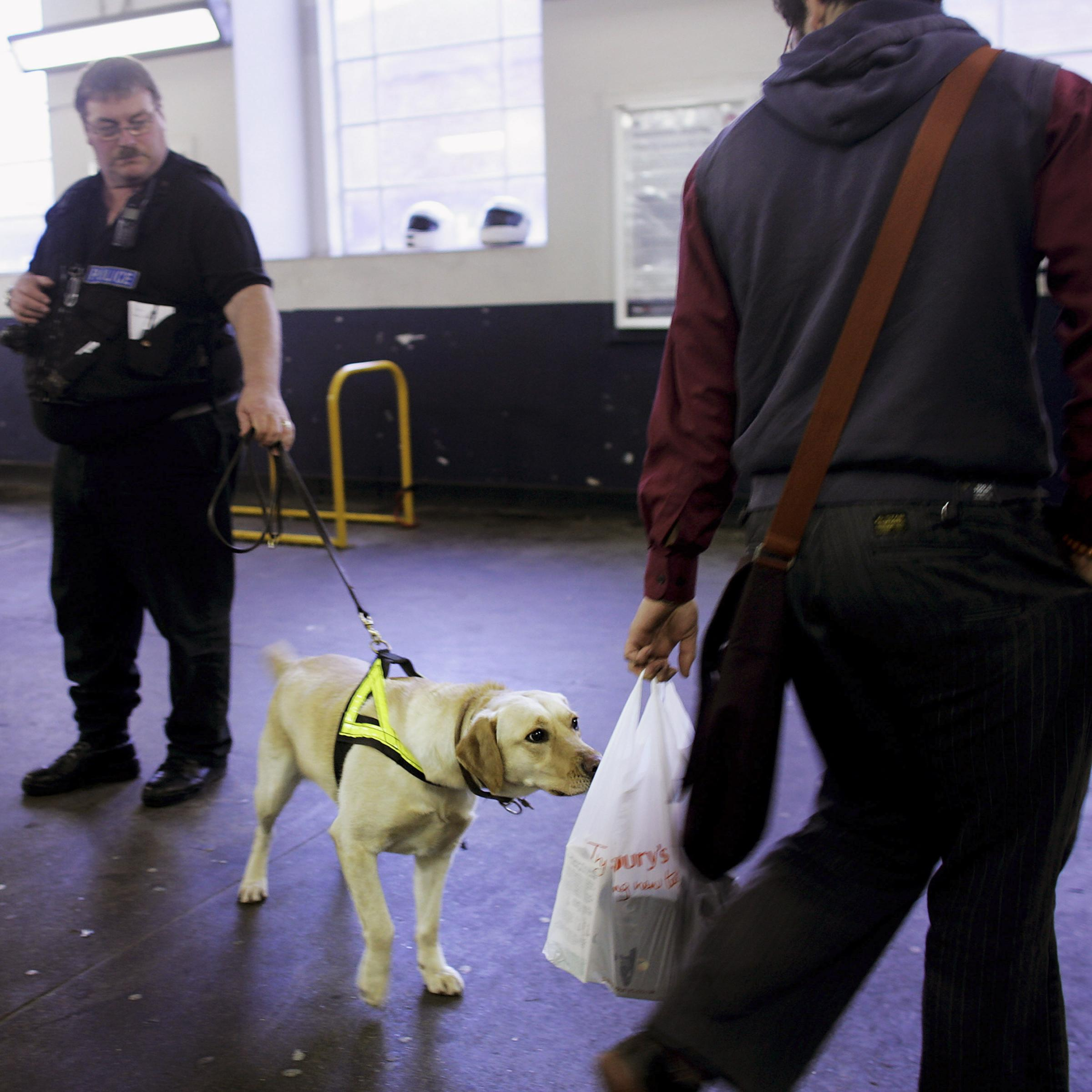 How To Train A Drug Sniffing Dog