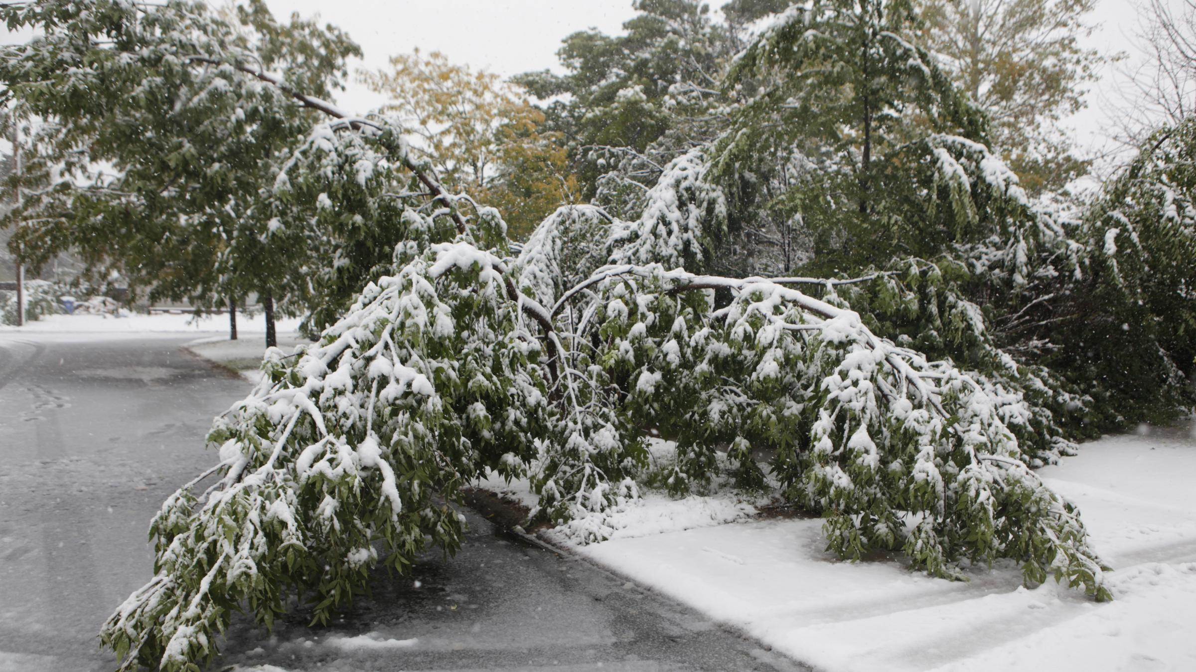 how to cut down large tree branches