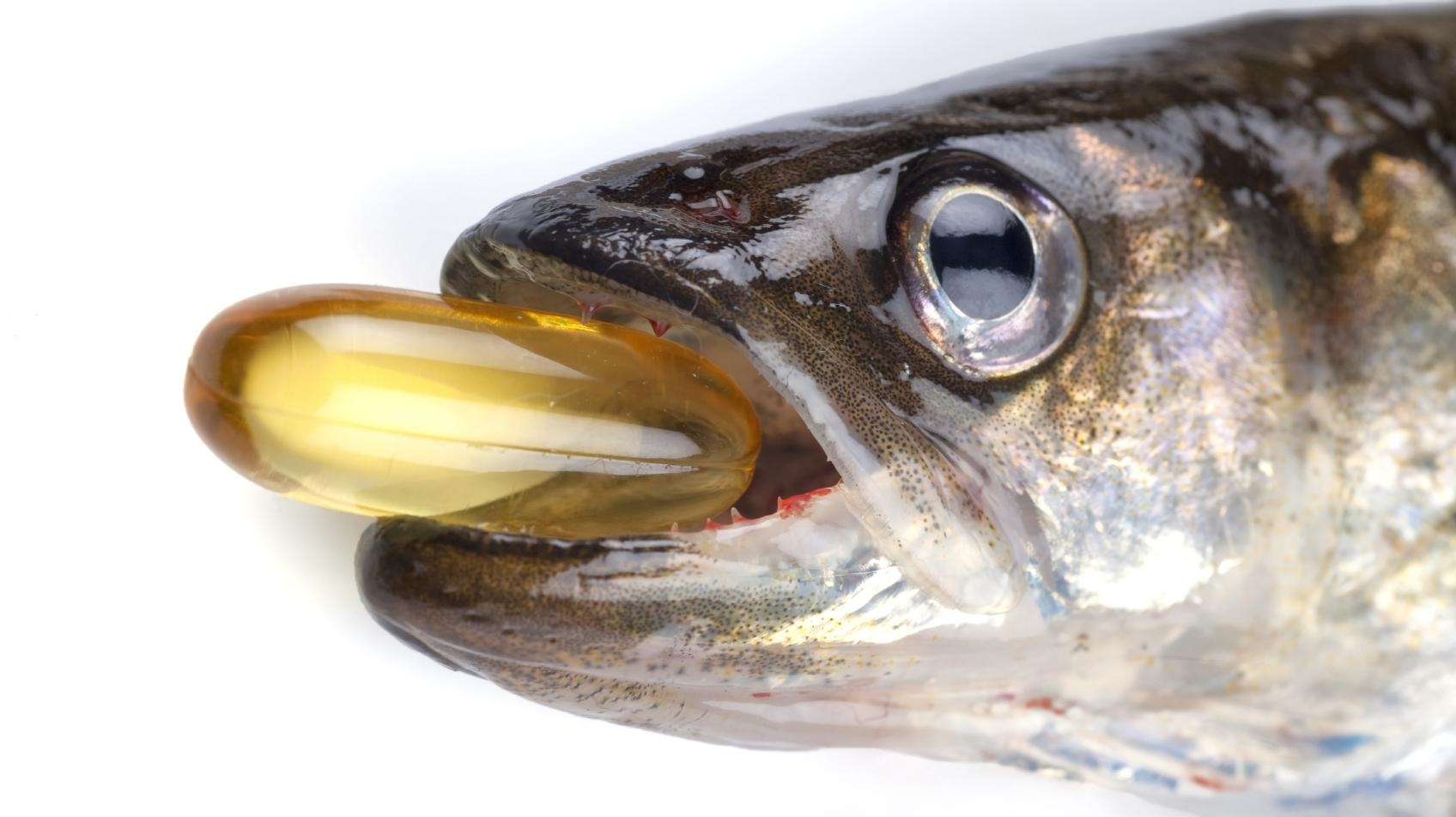 Why can 39 t fish oil supplements keep our brains sharp for Fish that eat other fish