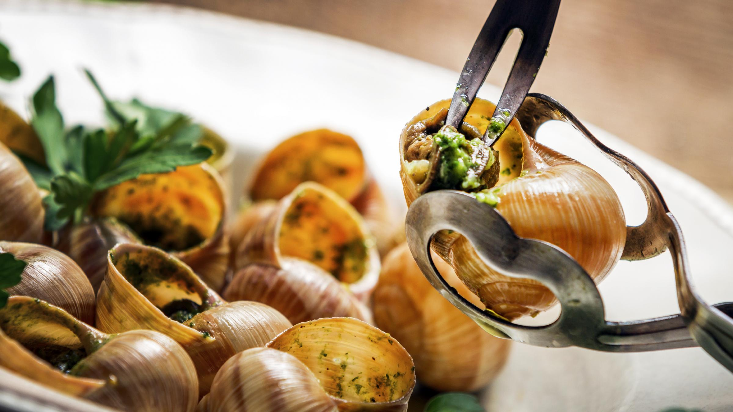 Save the escargot snail devouring predator rears its head for Cuisine francaise