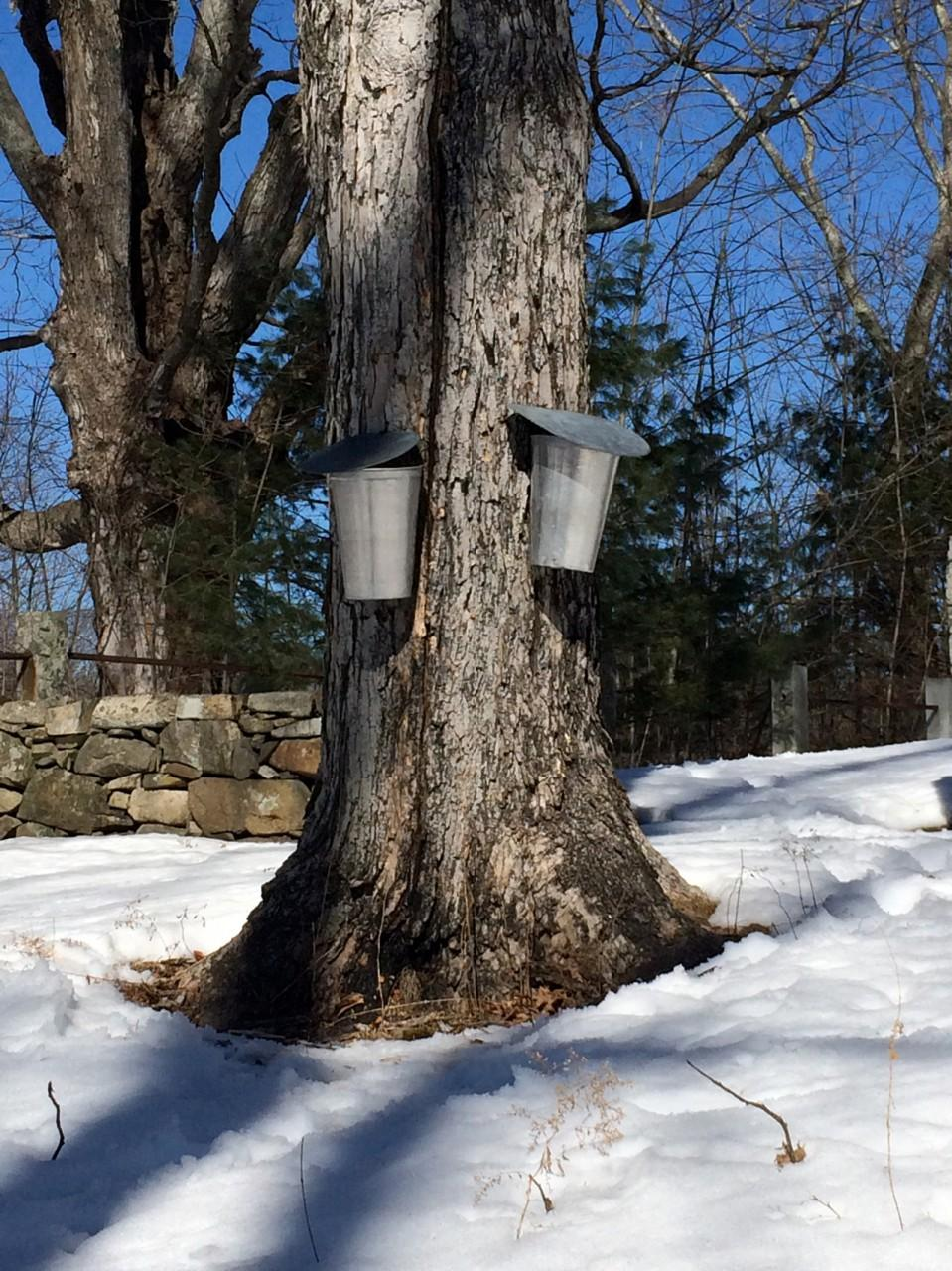 maple syrup recipes from chef kathy gunst new hampshire public radio