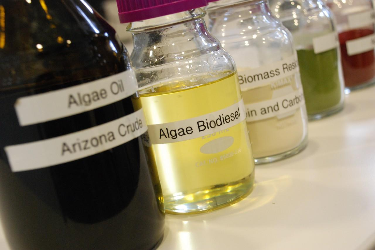 Researchers Experiment With Algae-Based Biofuel | WWNO