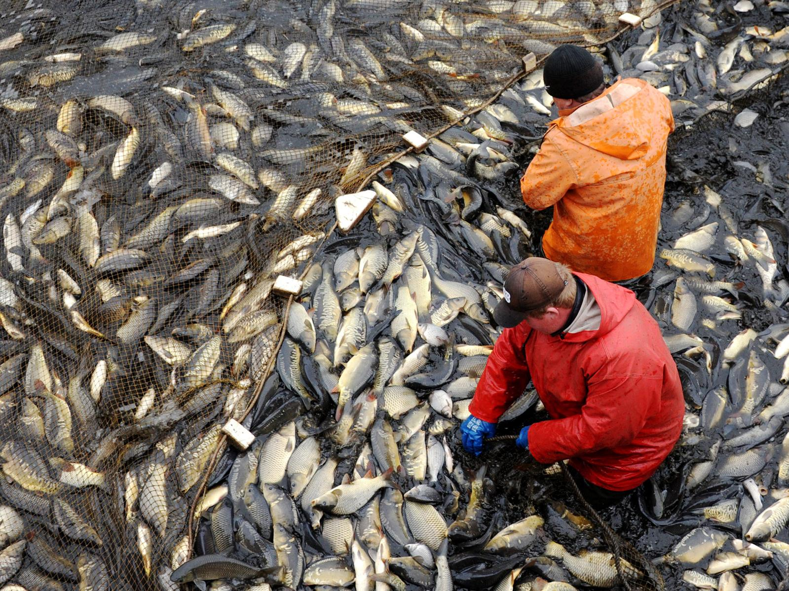 Can farmed fish feed the world without destroying the for World without fish