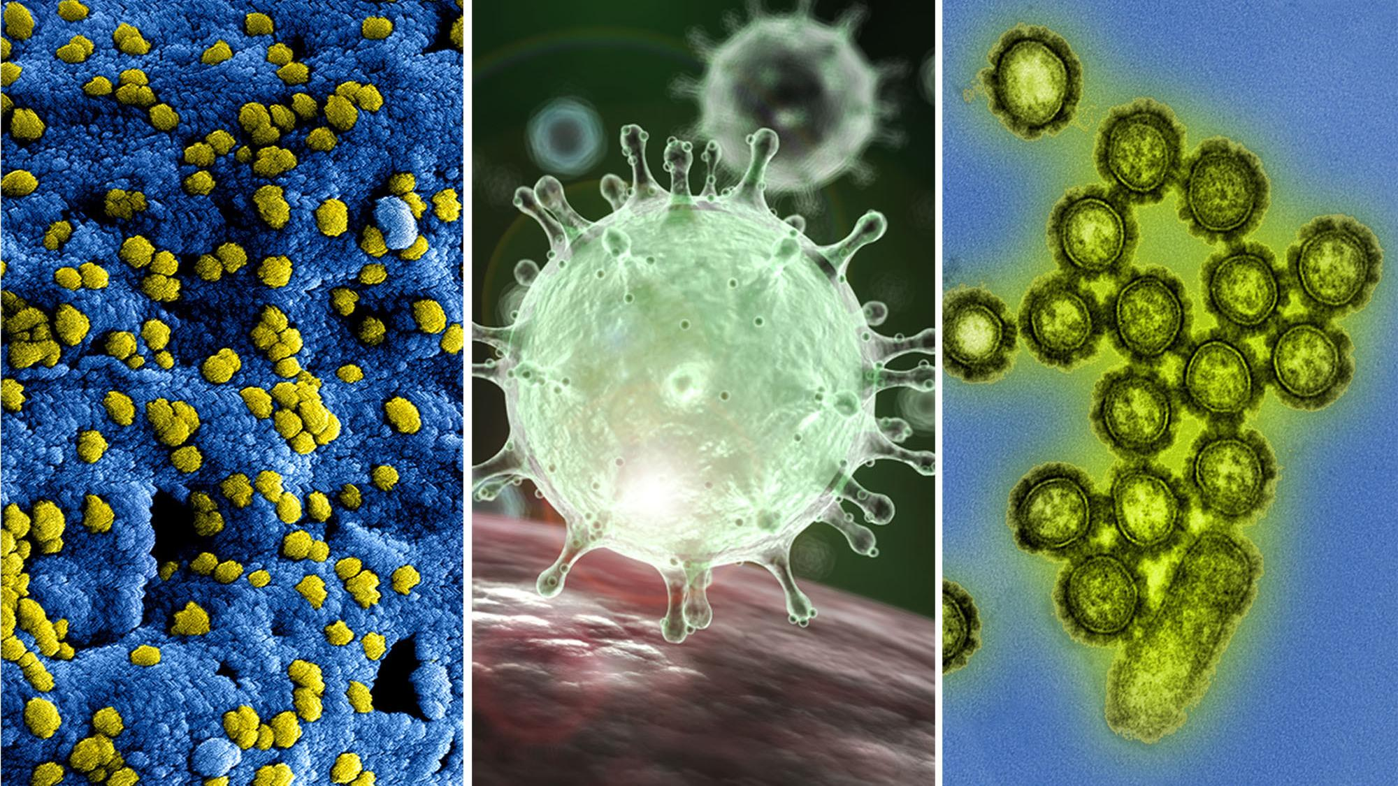 a study of influenza virus The purpose of this study is to describe the immunogenicity of the prototype quadrivalent influenza vaccine (qiv) compared with the 2009-2010 trivalent.