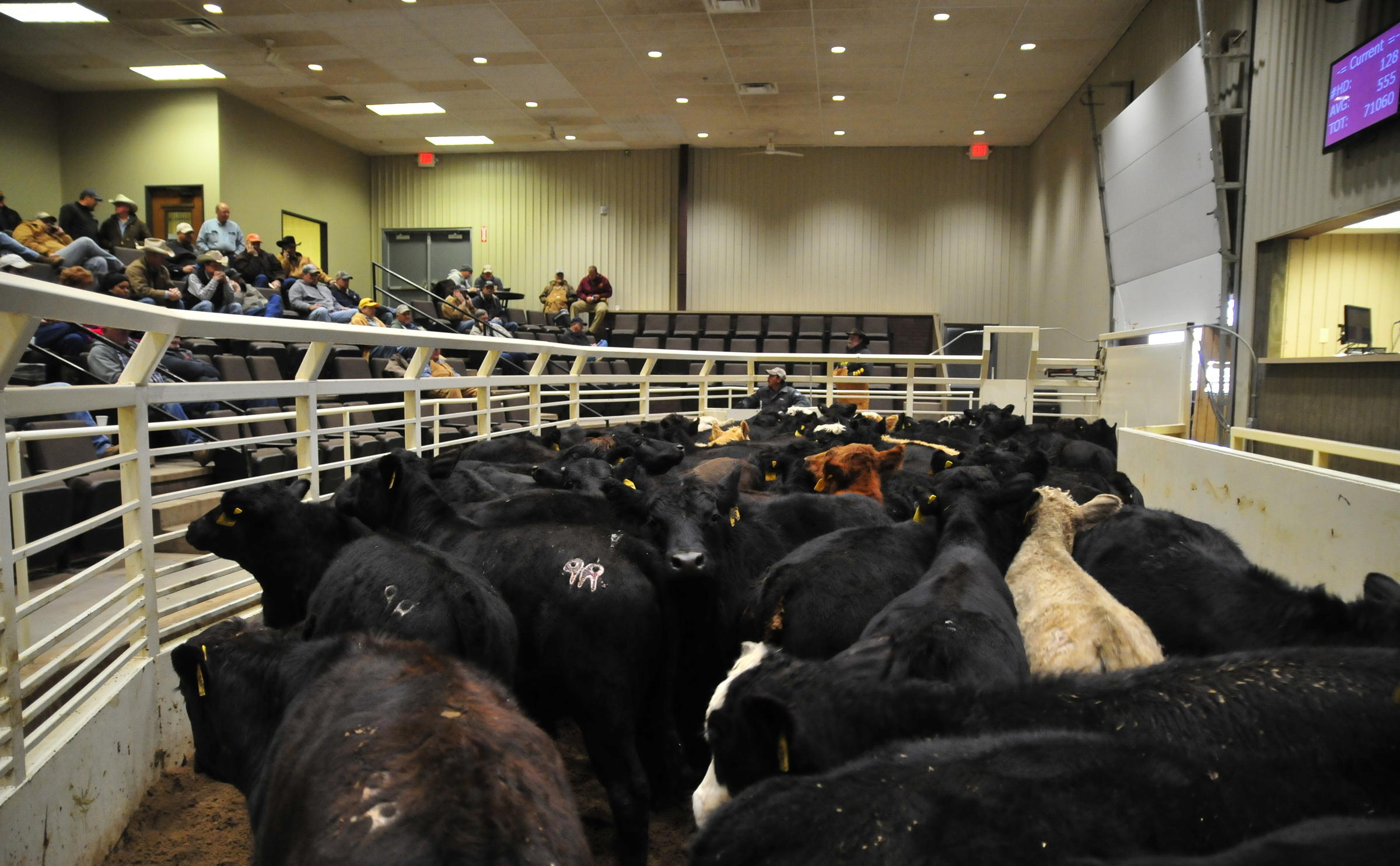 livestock auctions: