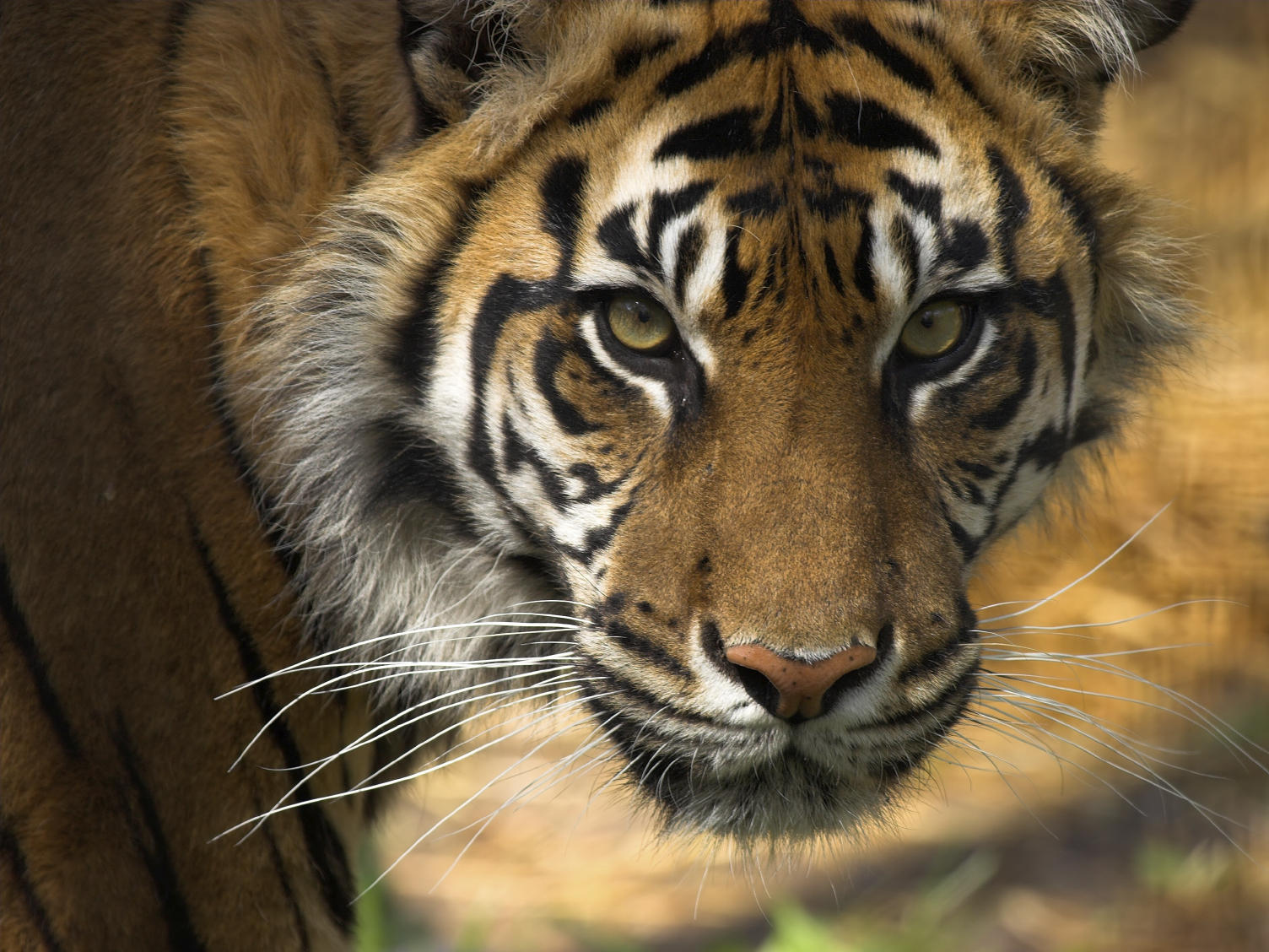 'Blood Of The Tiger': Shedding Light On China's Farmed ...