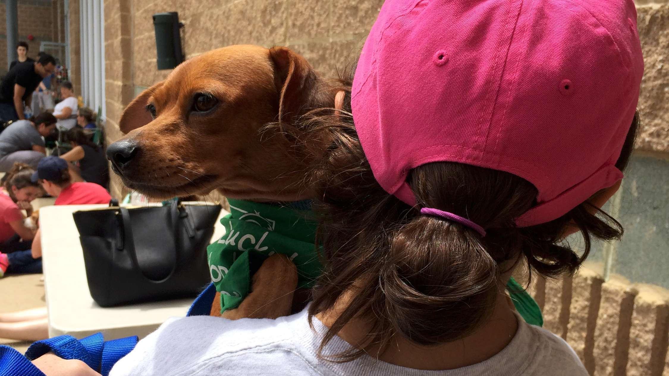 Dog Adoption Md Rockville