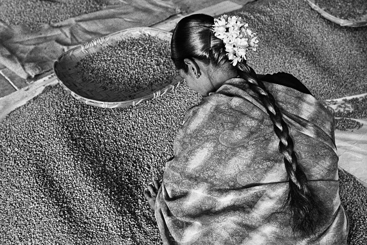 photo essay your cup of coffee is ready for its closeup  selecting beans for export in
