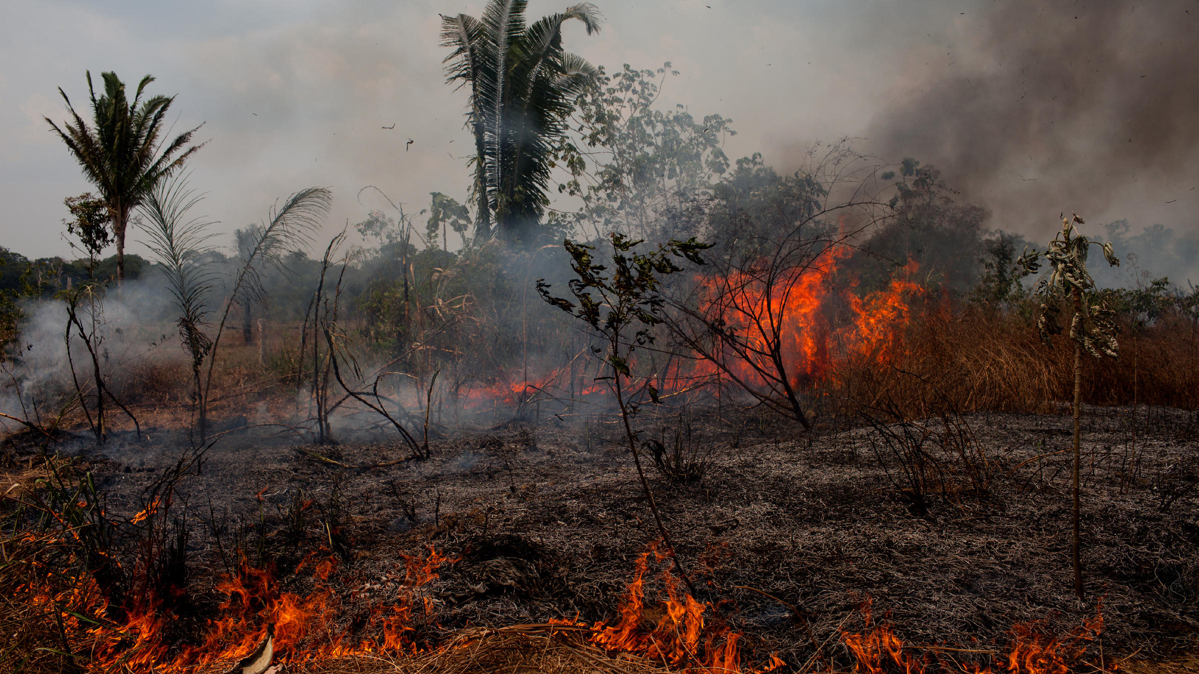 deforestation of the amazon Deforestation in brazil's amazon forests has flipped from a decreasing to an increasing trend, according to new annual figures recently released by the country's.