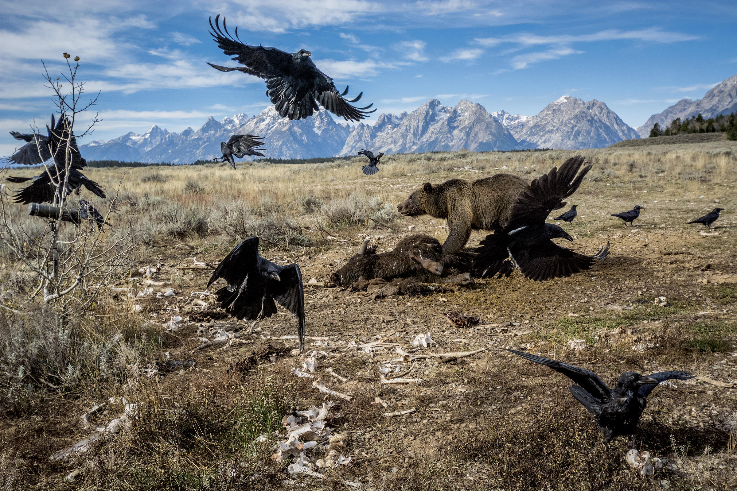 Is Yellowstone National Park In Danger Of Being Loved To