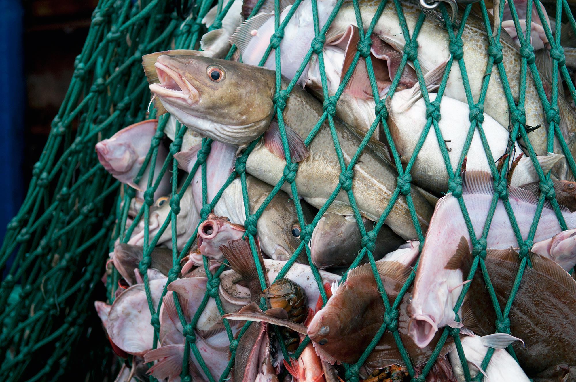 Fisheries scientist under fire for undisclosed seafood for Fish catching net