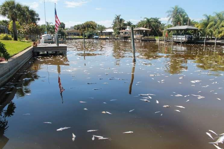 Algae blooms changing a way of life on florida 39 s east for Florida canal fishing