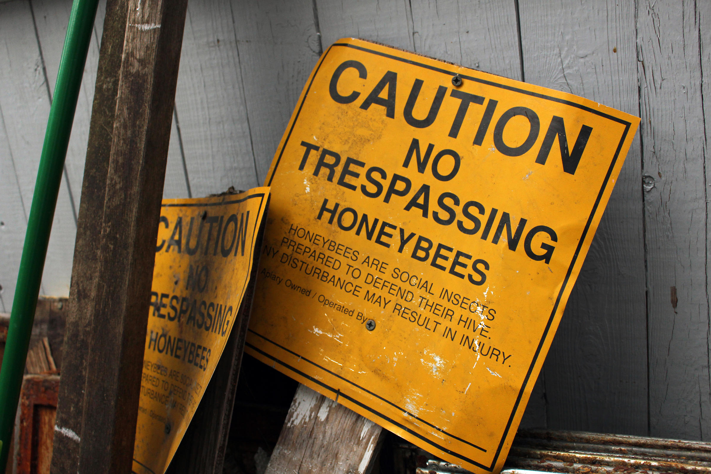 in ri keeping a close tab on threats to bees new hampshire