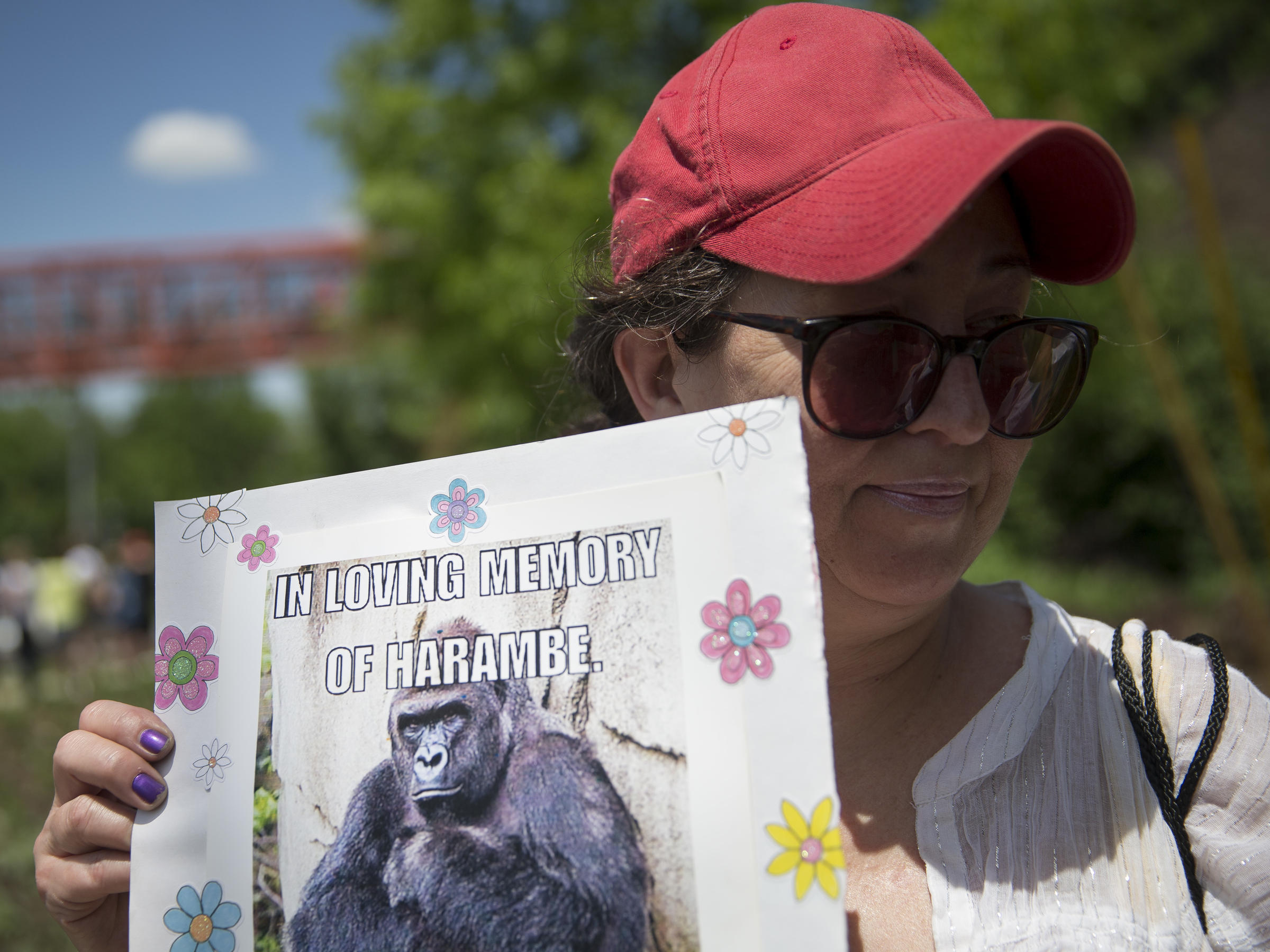 Family releases new statement after gorilla killed at Cincinnati Zoo