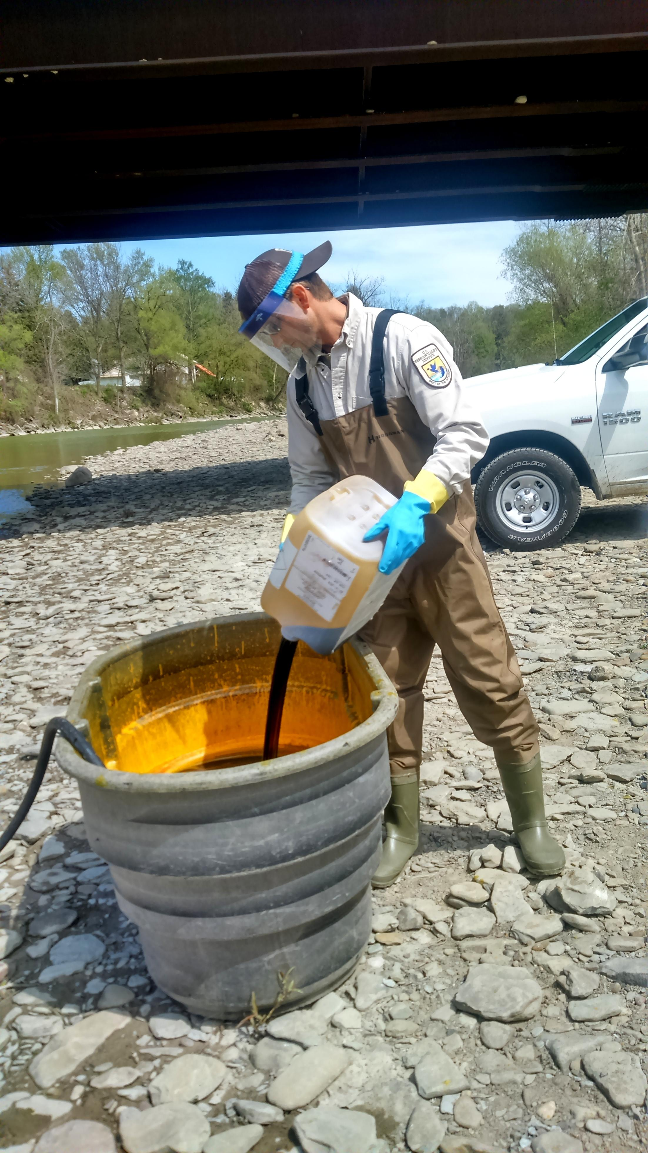 Invaders of the great lakes sea lamprey wxxi news for Us fish and wildlife