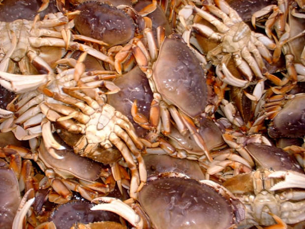 Scientists are closer to understanding what makes ocean 39 s for Crab fishing oregon