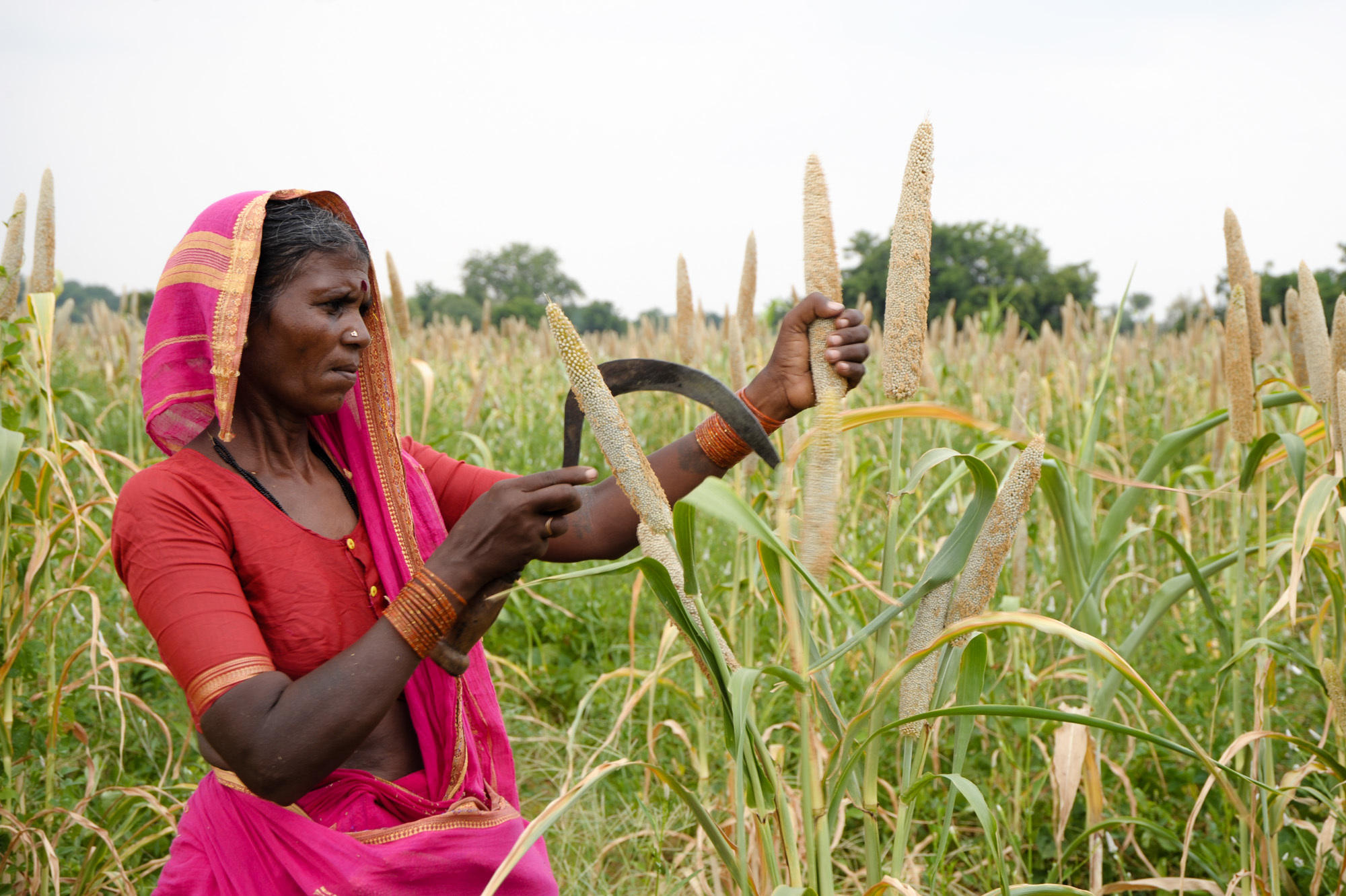 about farmers in india in hindi रूपा झा मिलीं कुछ उन महिलाओं से जिन्होंने अब खेती किसानी का.