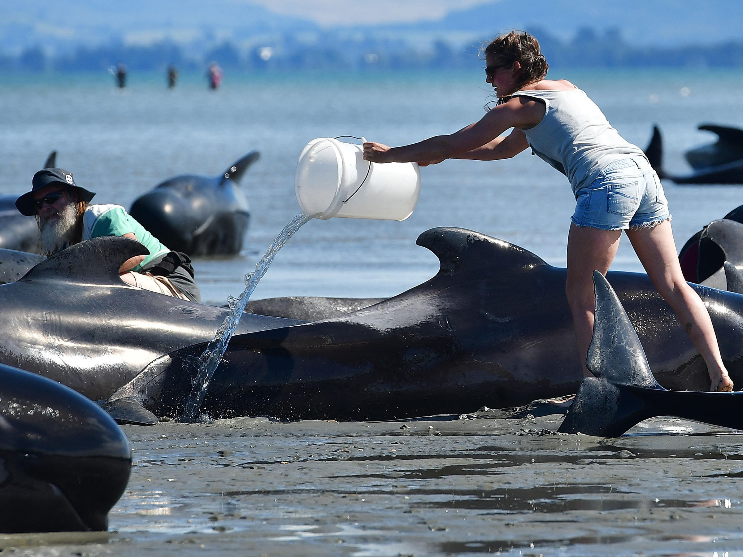 200 beached whales swim away in NZ