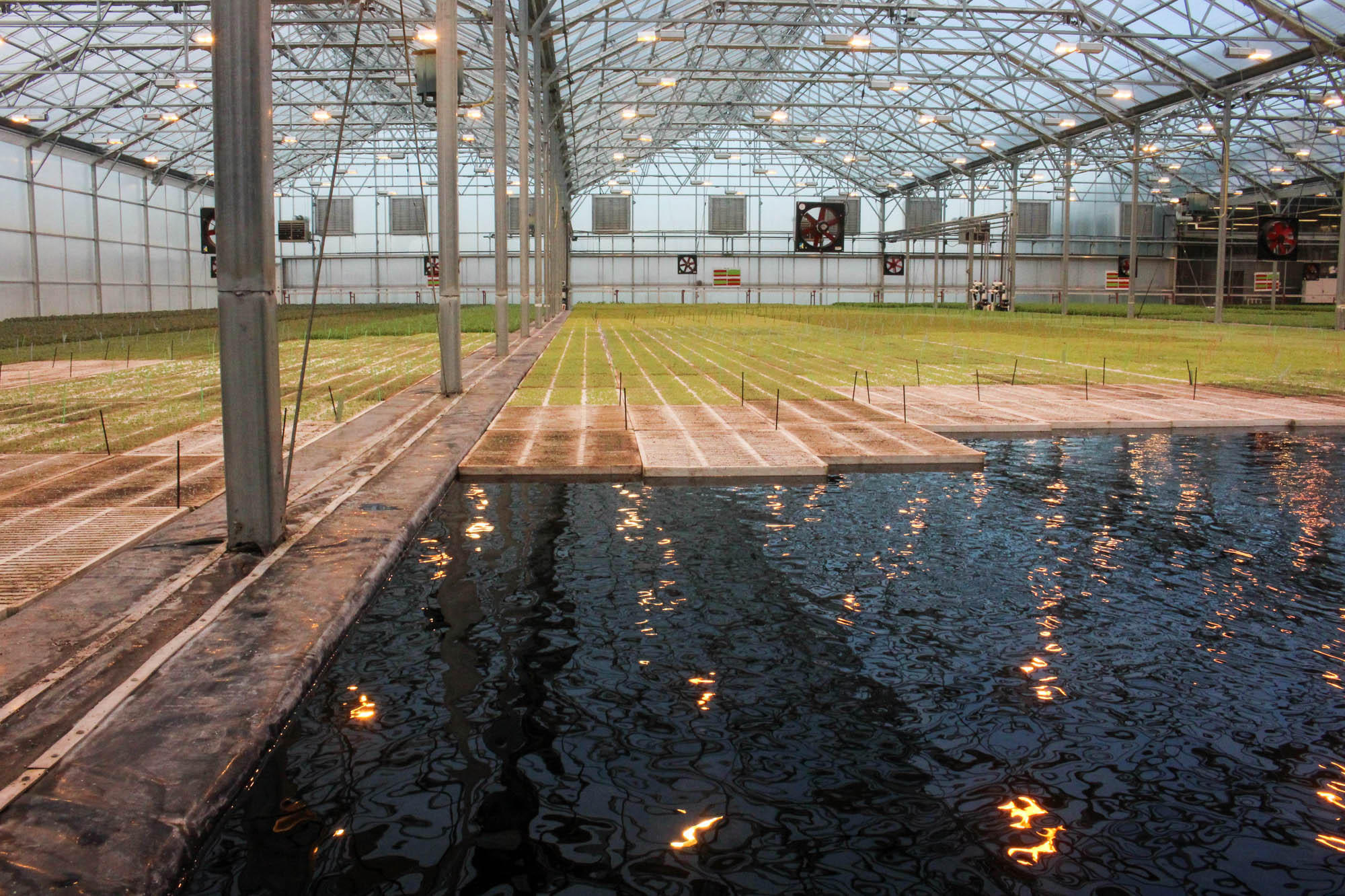 In The Brightfarms Greenhouse Salad Greens Grow On Floating Boards Their Roots Extend Into Water Where They Get Nutrients