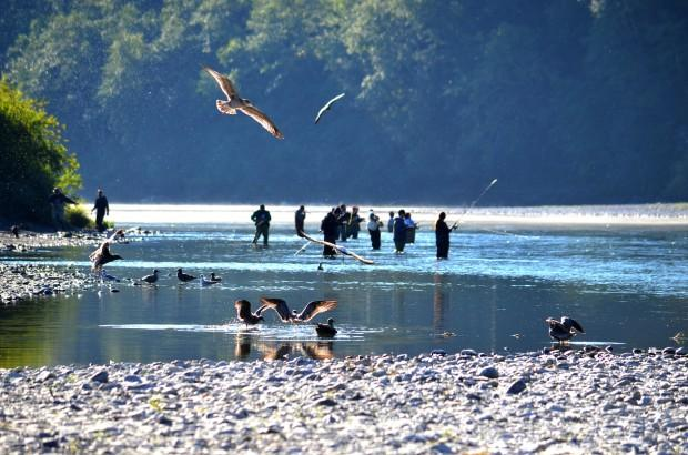 Returning Salmon Numbers Looking Meager For Oregon