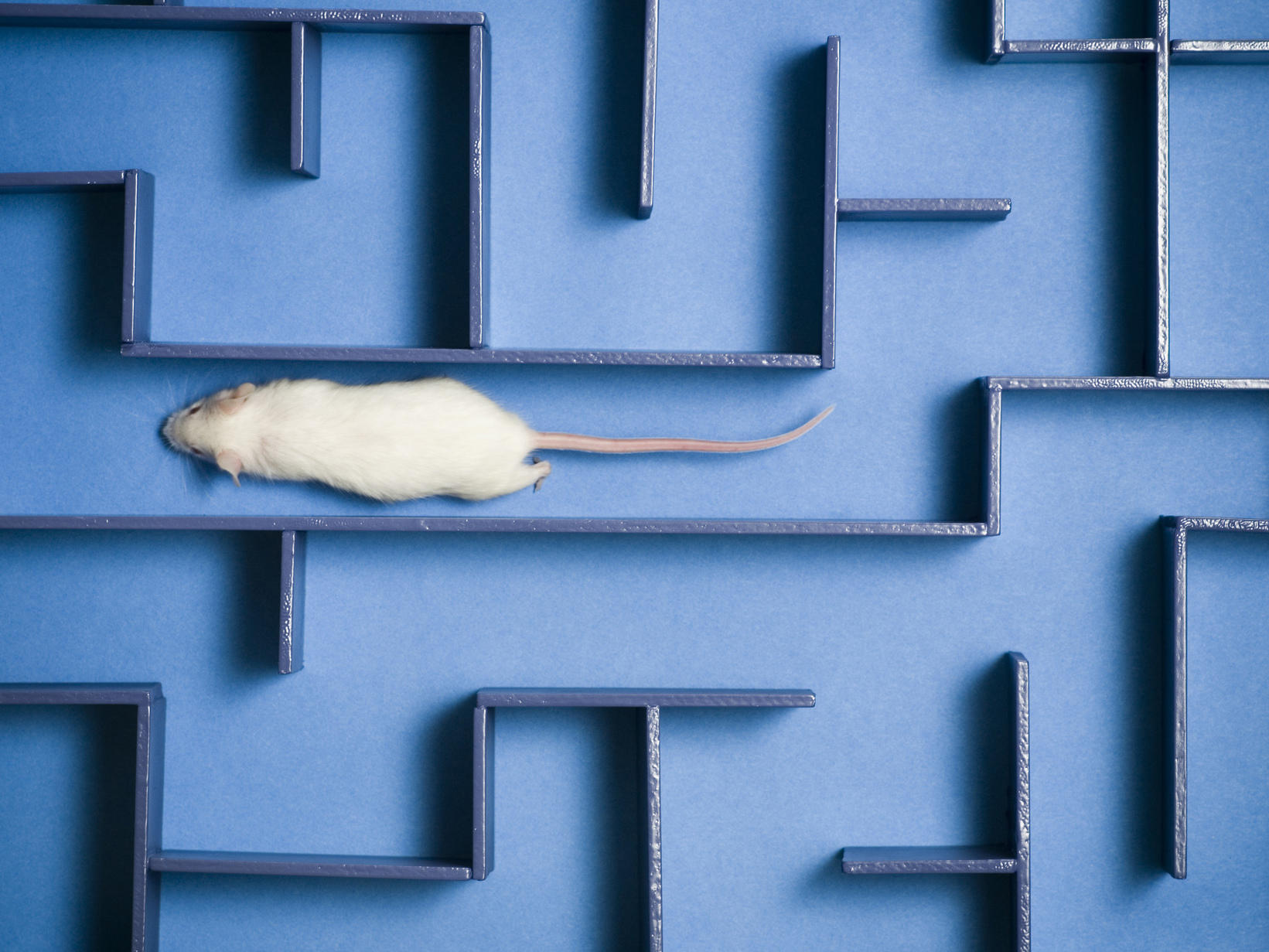 Human cord blood boosts brains of old mice