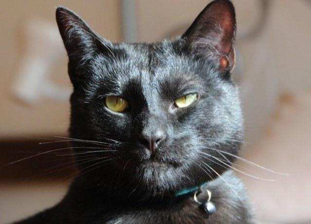 Will Someone Please Adopt This 'Utter Bastard Of A Cat'?