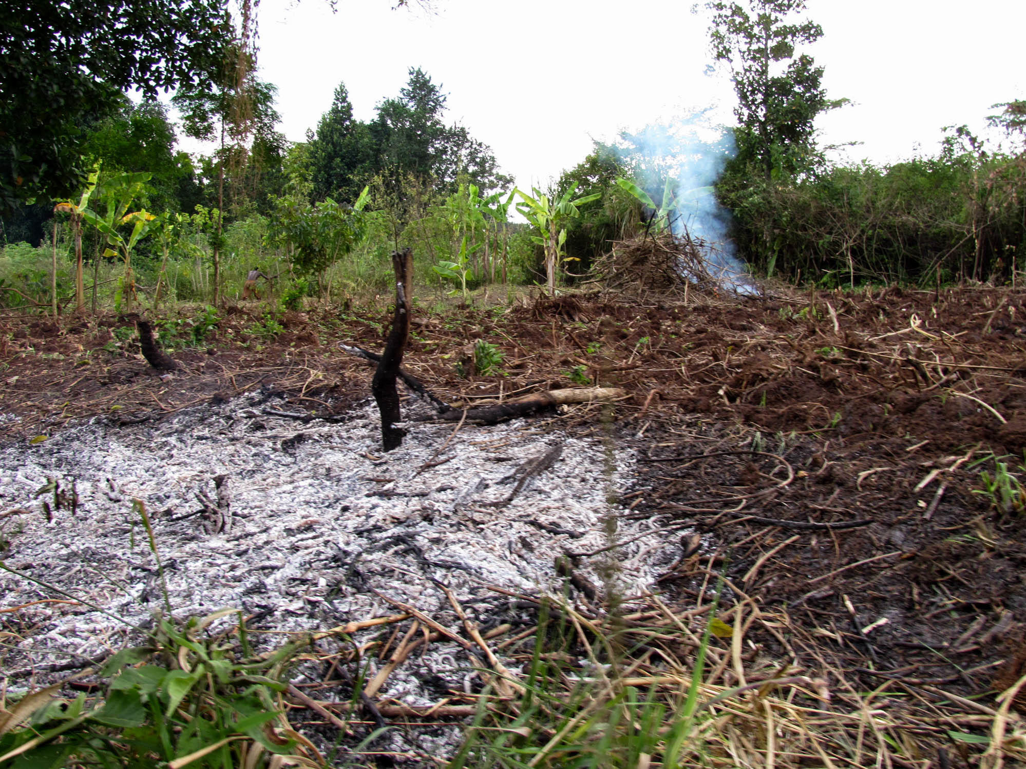 Is it a good idea to pay villagers not to chop down trees kuow news and information - Small farming ideas that pay off ...