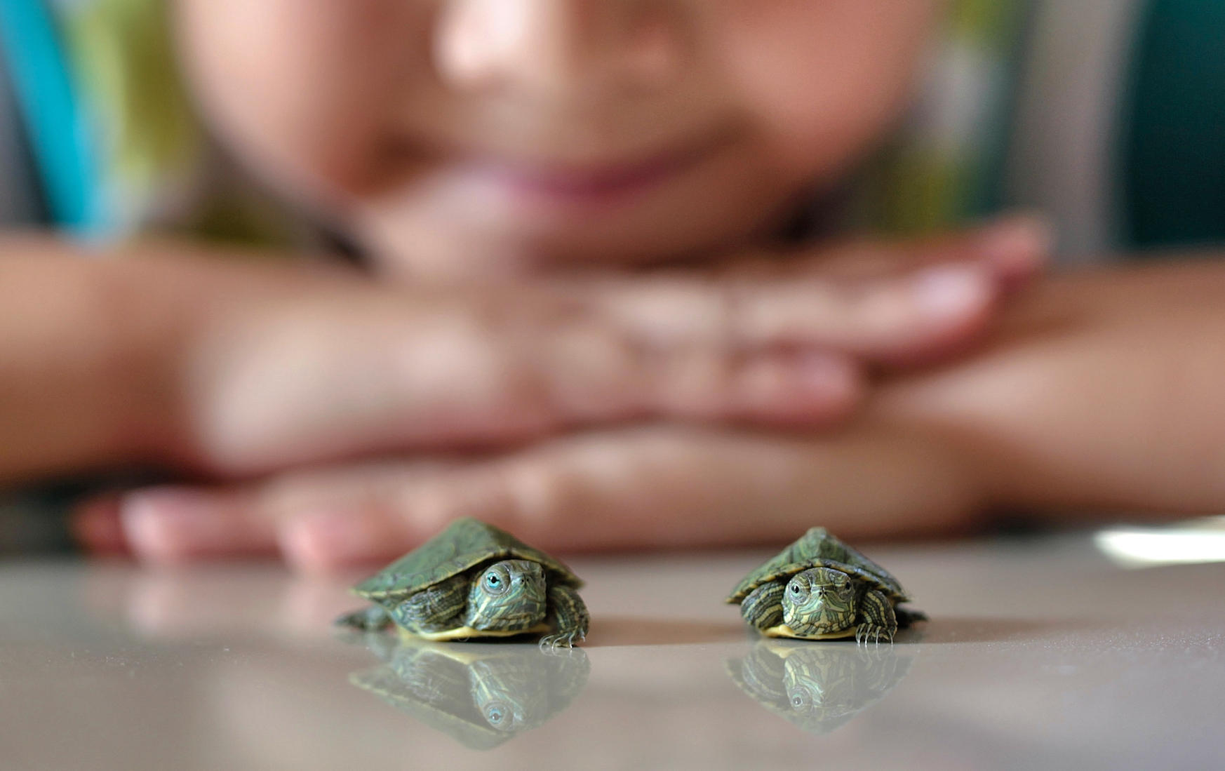 Beware of Turtle: Pet Reptiles Cause Salmonella Outbreak in 13 States