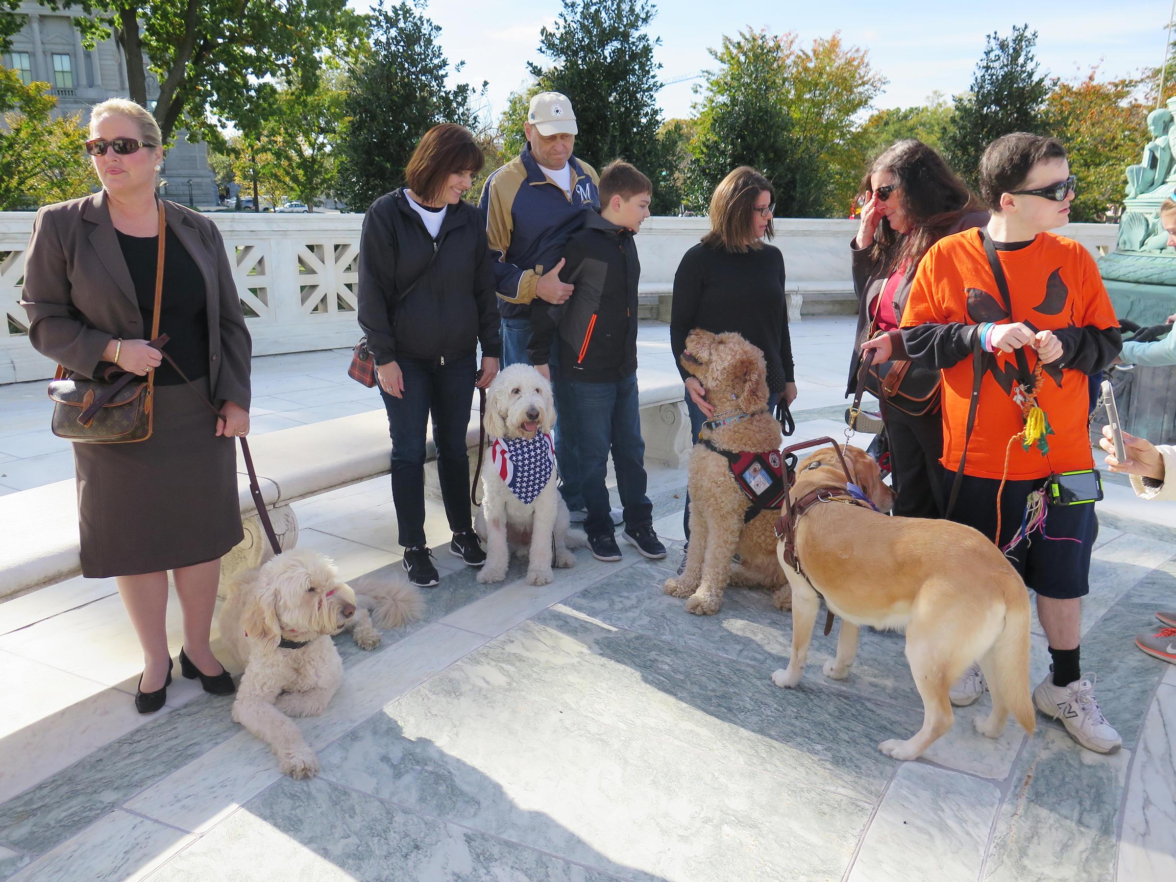 essays service dogs