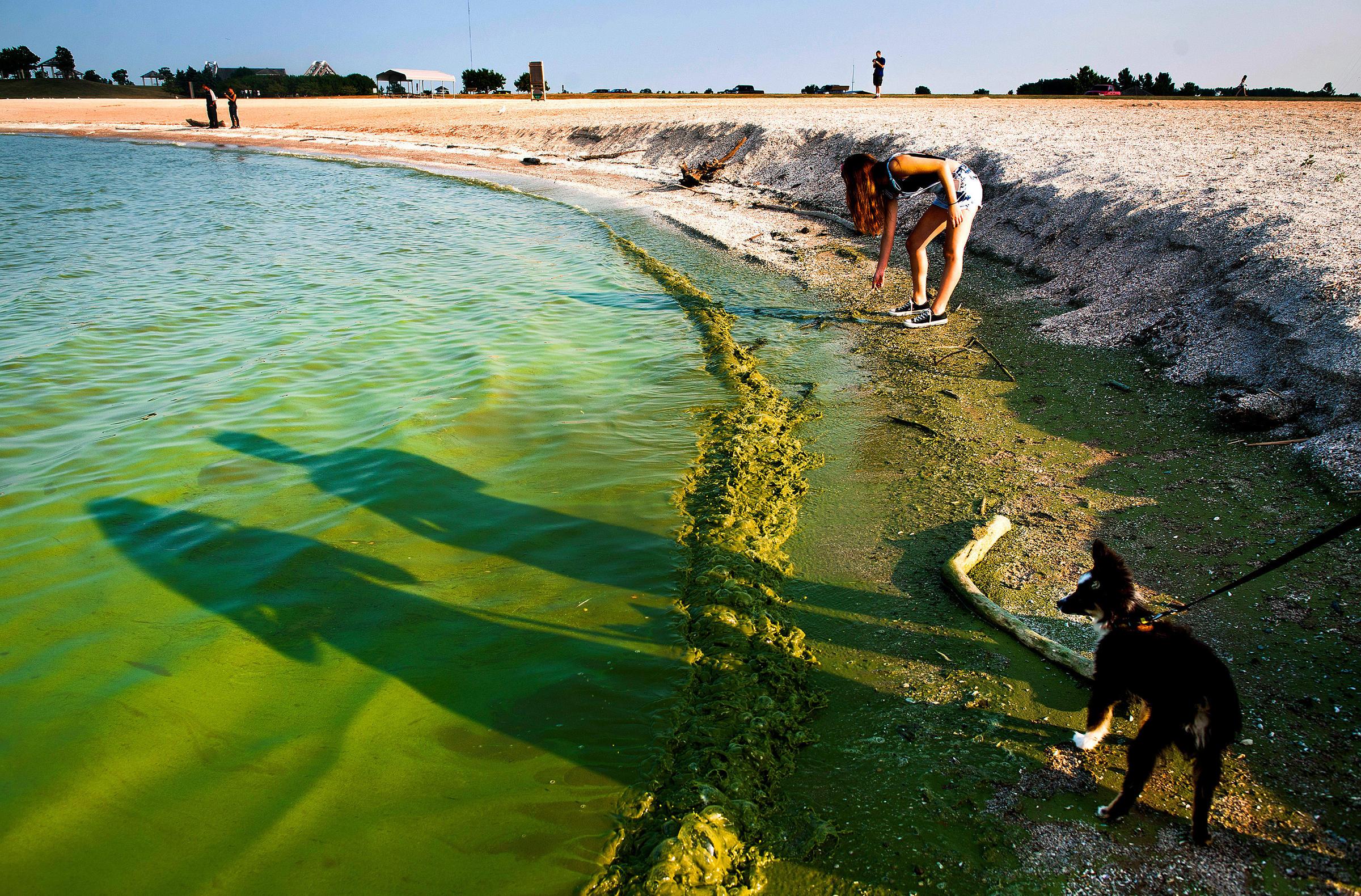 Algae Toxins In Drinking Water Sickened People In 2 Outbreaks