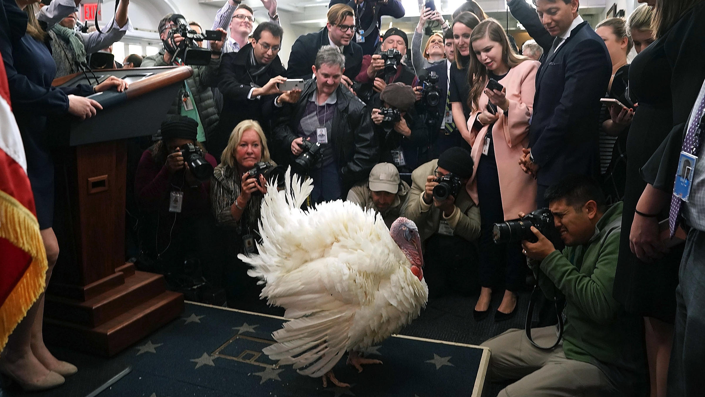 MN turkeys get their own luxury hotel room before pardoning ceremony