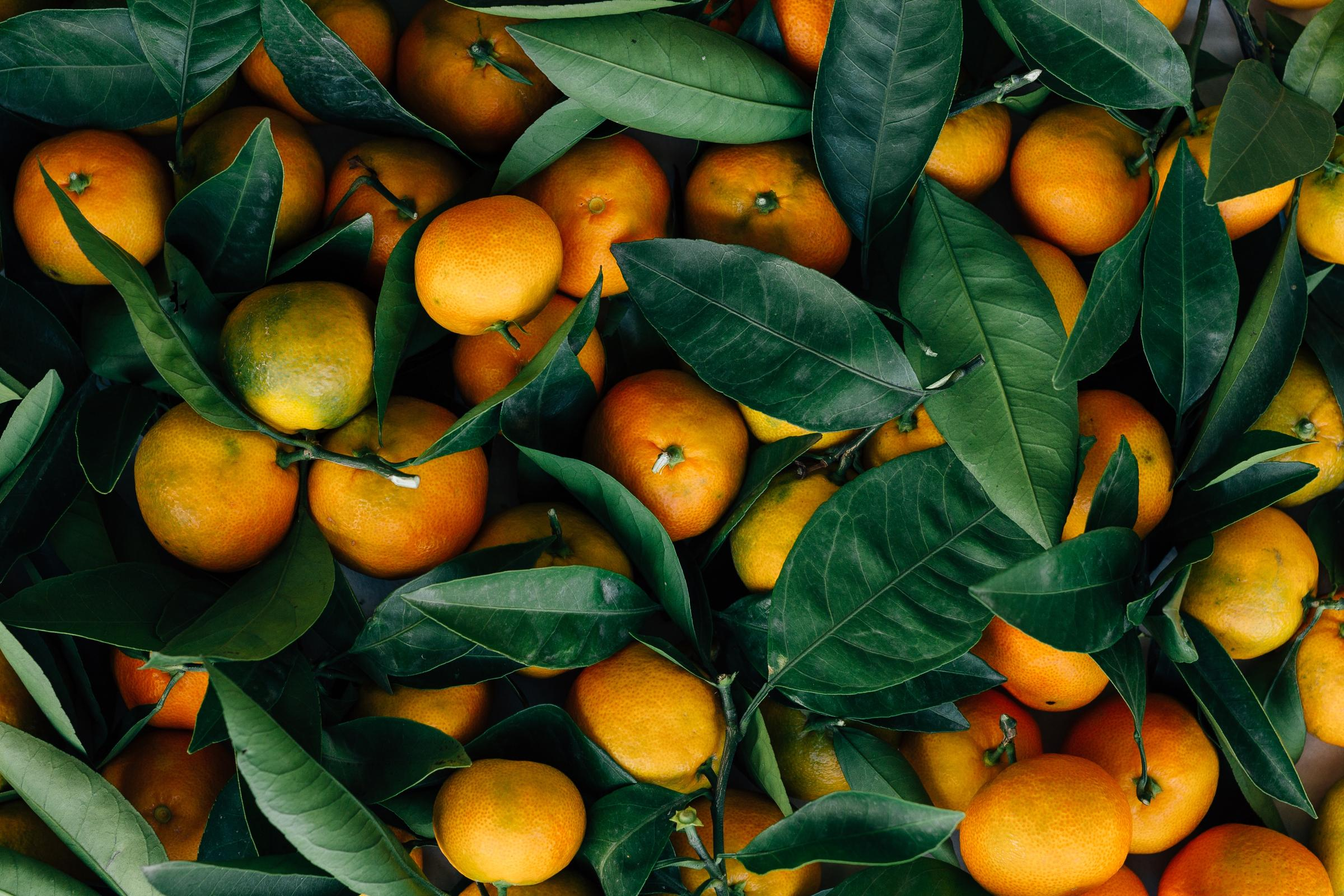 USDA reduces expectations for Florida's citrus crop harvests