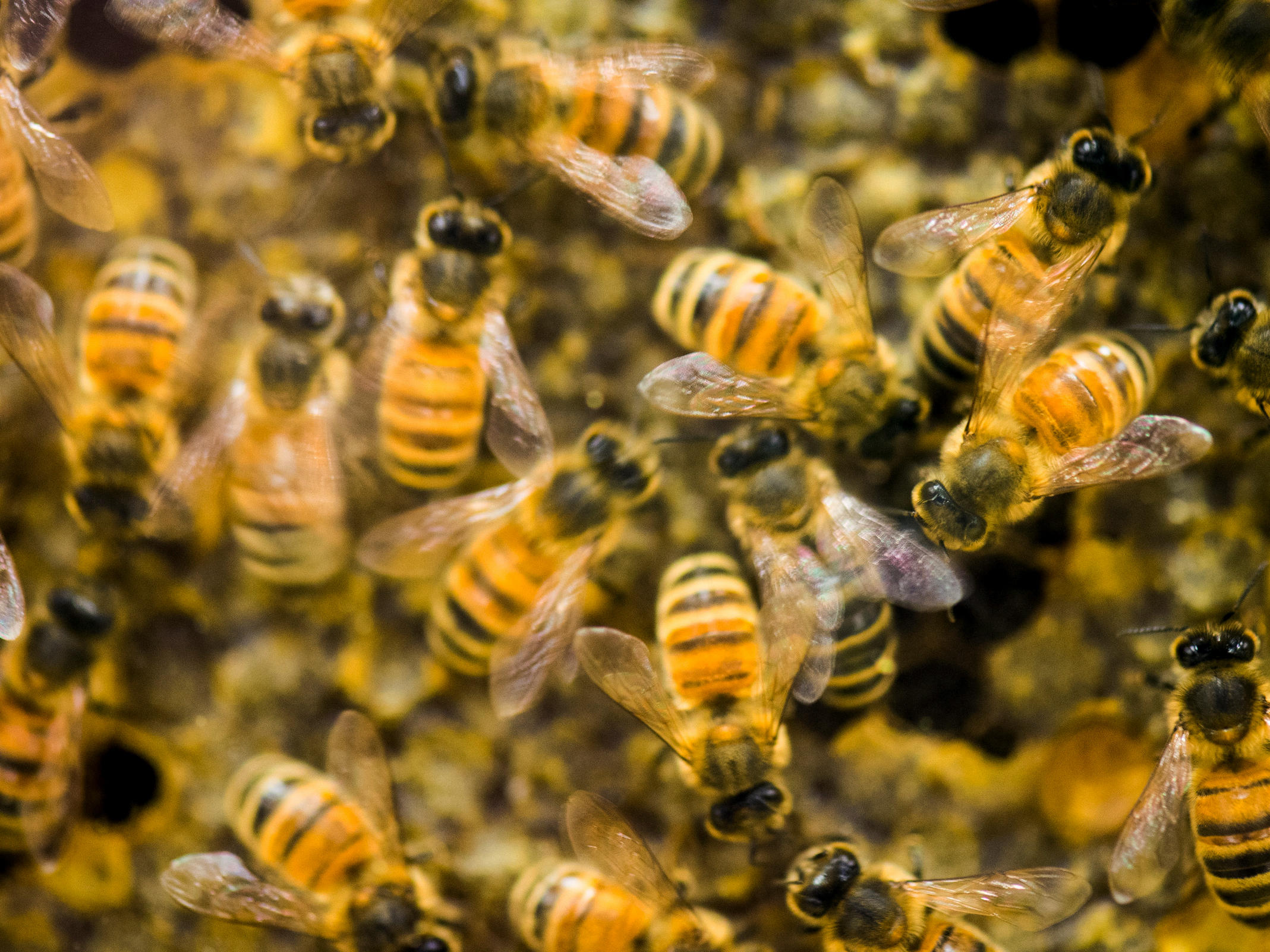 2 boys charged with felonies after half-million bees killed