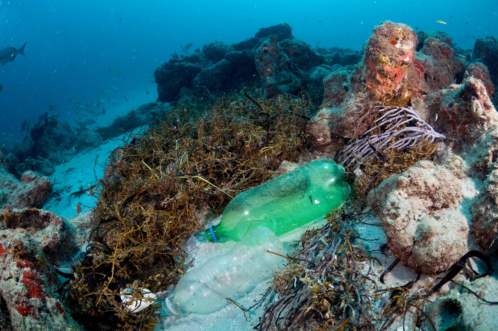 Ocean plastics raise risk of coral reef disease