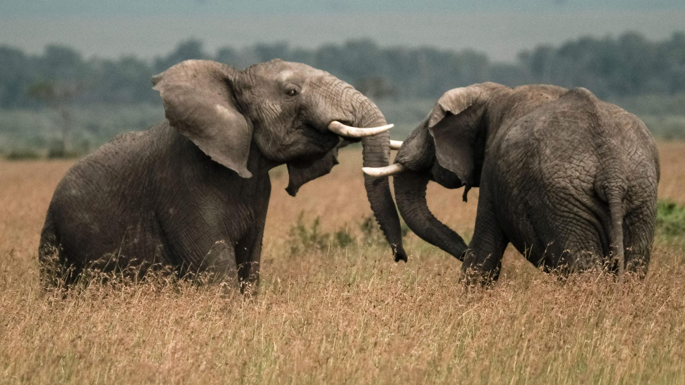 U.S. to Allow Elephant Trophy Imports Despite Trump's Condemnation