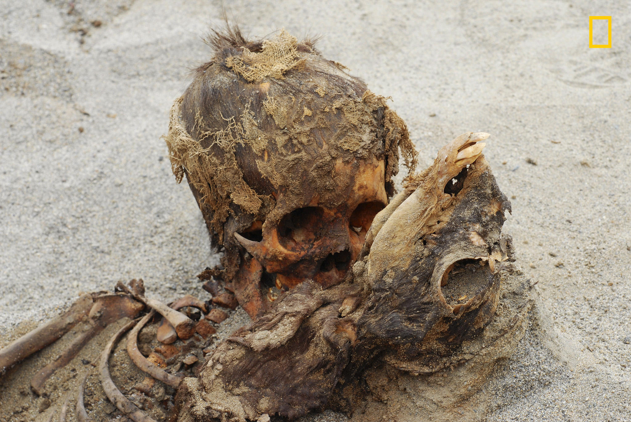Ancient Peru's child sacrifice discovery may be largest in history