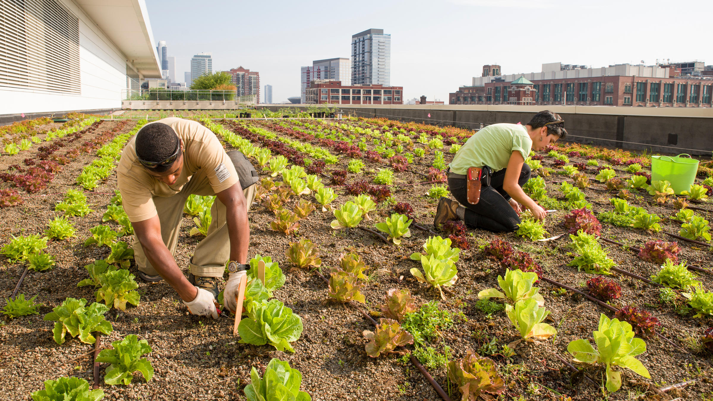 Rooftop Farming Is Getting Off The Ground | WLRN